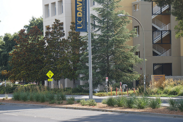 median by the dorms