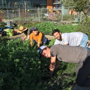 Edible Landscape Learning by Leading Program students