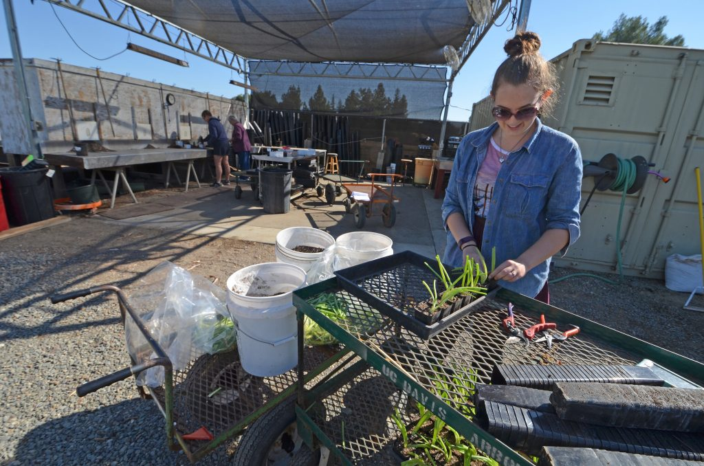 Environmental Horticulture and Urban Forestry student learns how to propagate a variety of plants.