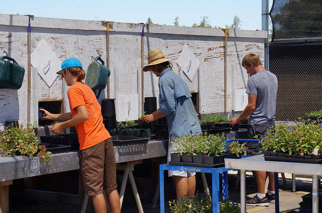 Nursery and Propagation interns tending to plants