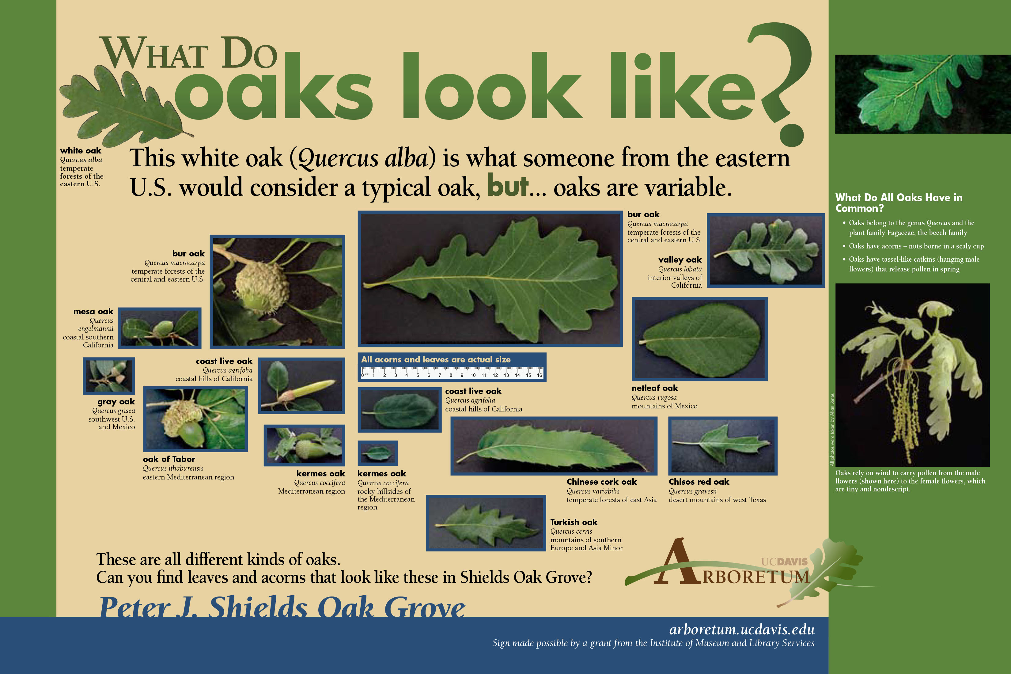 Preview of Peter J. Shields Oak Grove exhibit signs