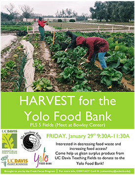Yolo Food Bank Flier