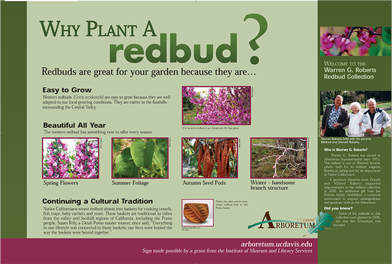 Redbud Collection