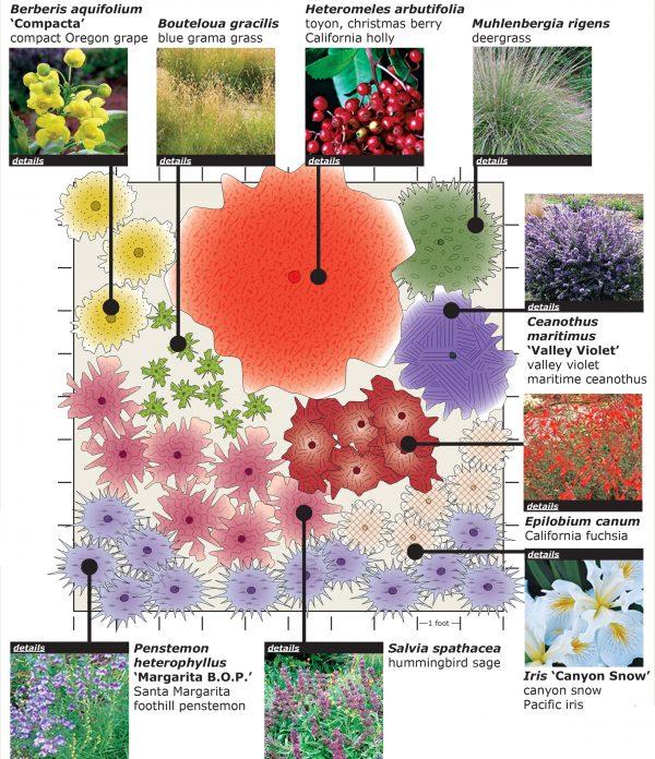 California Native Planting Plan Uc Davis Arboretum And Public Garden