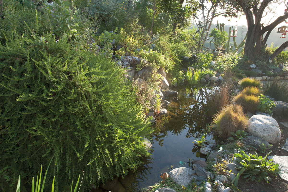 Photo of pond in Gottleib Native Garden