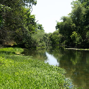 Image of the UC Davis Putah Creek Riparian Reserve
