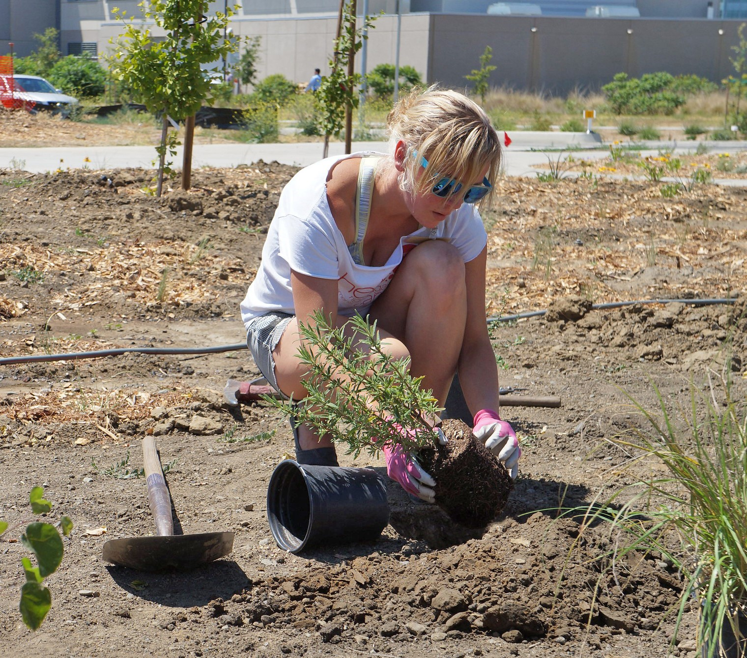 photo of a student planting a plant