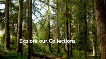 Explore our Collections