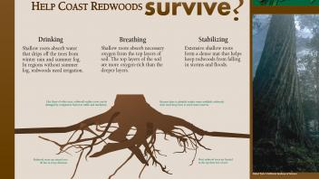 Image of an exhibit sign in the UC Davis Arboretum about the shallow roots of redwoods.