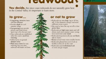 Image of an exhibit sign in the UC Davis Arboretum about growing redwoods.