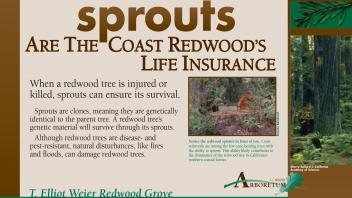 Image of an exhibit sign in the UC Davis Arboretum about redwood sprouts.