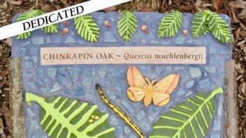 Chinkapin Oak plaque