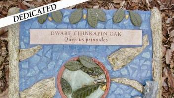 Dwarf Chinkapin plaque