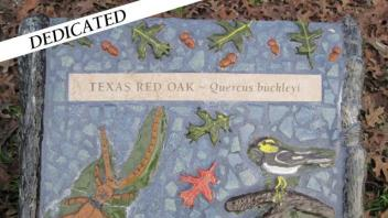 Texas Red Oak plaque