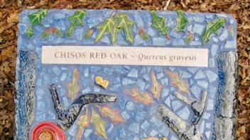 Chisos Red Oak plaque
