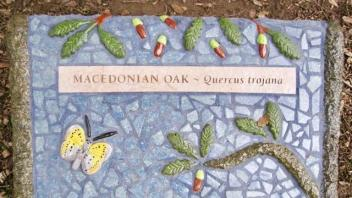 Macedonian Oak plaque