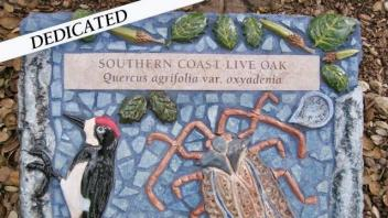 Southern Coast Live Oak plaque