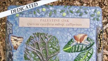 Palestine Oak Plaque