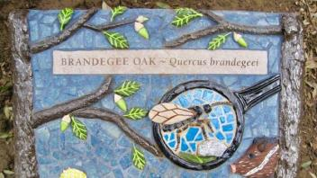 Brandegee Oak plaque