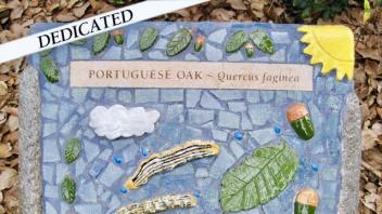 Portuguese Oak plaque