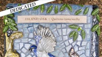 Island oak tree plaque