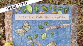 Costa Live Oak plaque