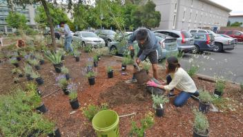 Image of students installing a sustainable landscape on Mrak Mall.