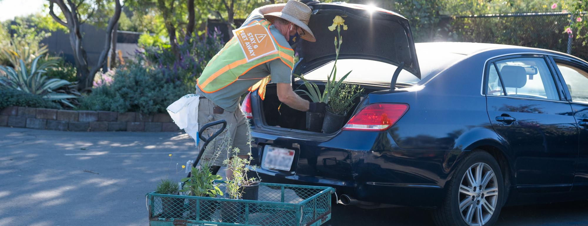 Image of online plant sales with curbside pick up at the UC Davis Arboretum Teaching Nursery.
