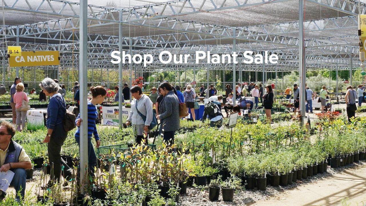 Shop our plant sales
