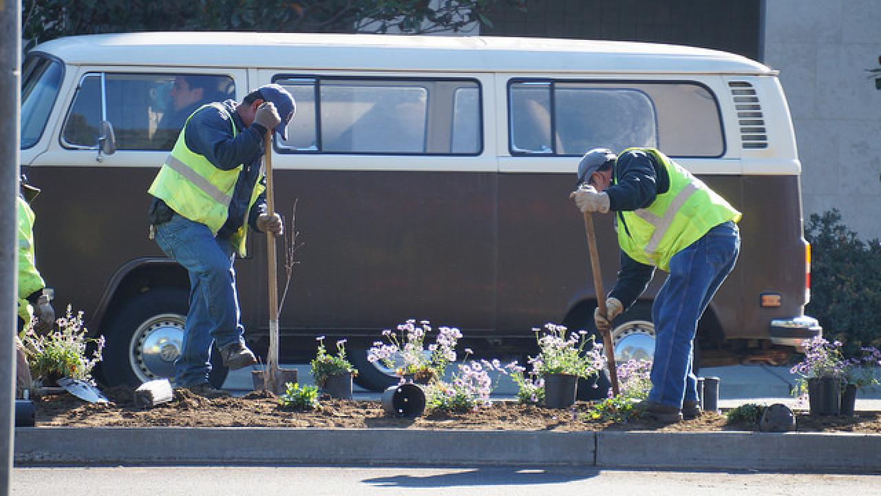 workers planting plants on the median