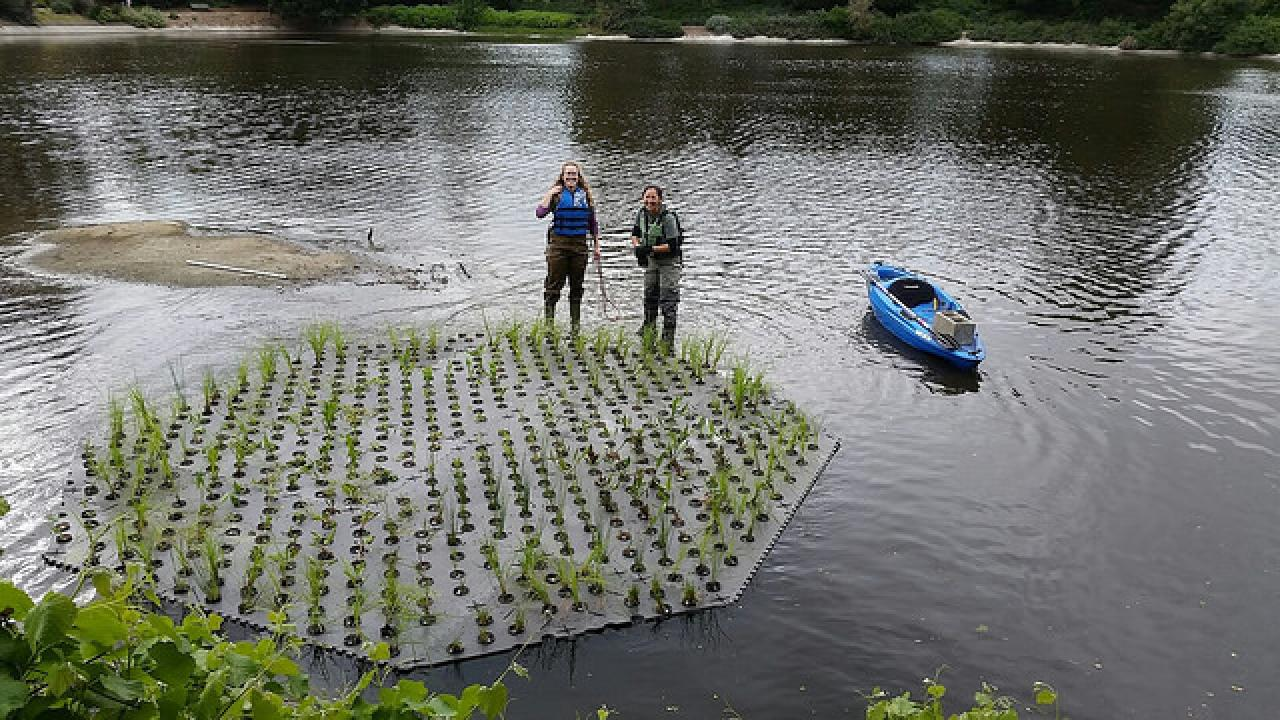 The Arboretum Waterway's New Floating Island: A Green