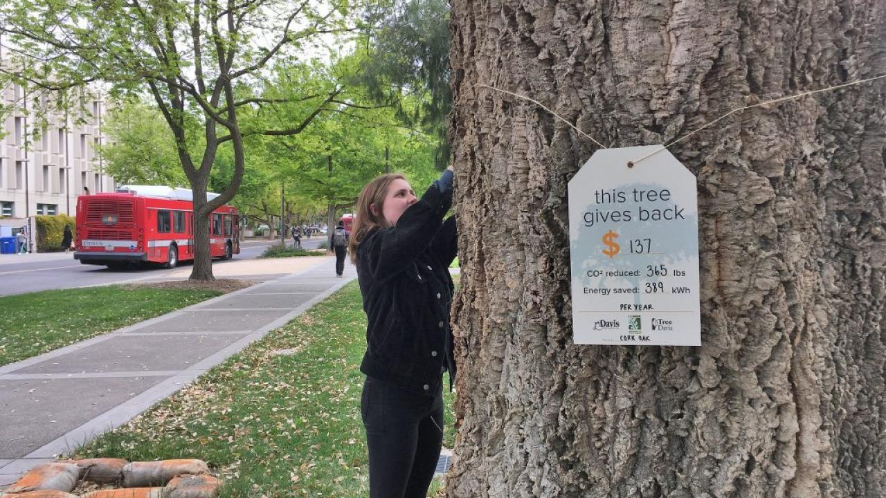 Hanging tree tag