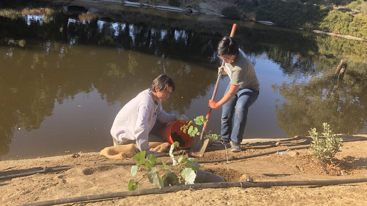 Image of two student interns from the Learning by Leading Waterway Stewardship team planting a wild grape cuttings to prevent erosion and create a wildlife habitat along the Arboretum Waterway.