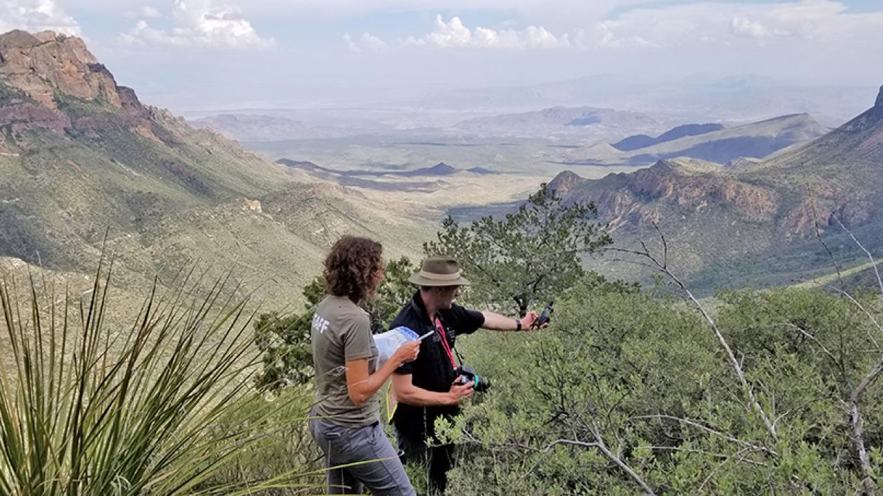 Image of UC Davis Arboretum and Public Garden staff collecting a GPS data point for a shrubby oak during an acorn collection project in west Texas.