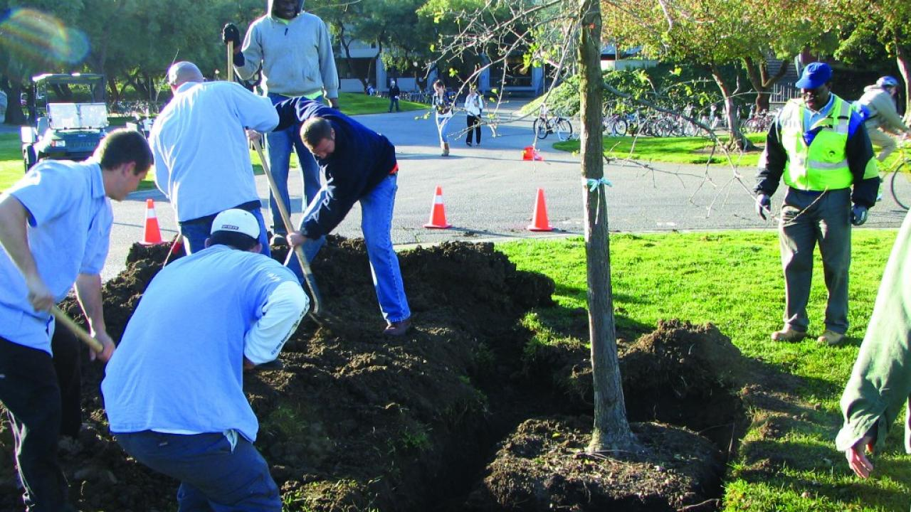 Grounds & Landscape Services secures grant for 100 new trees