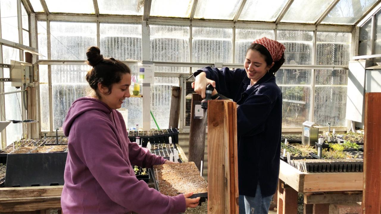Two students water their seeds in the greenhouse.