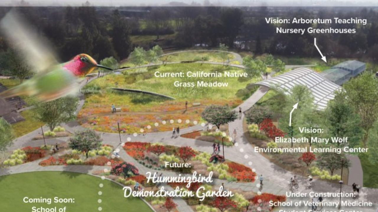Graphic of hummingbird demonstration garden