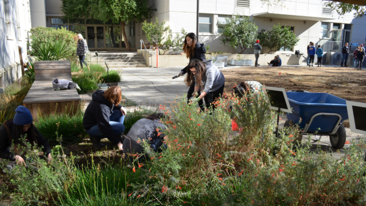 UC Davis students working on making their blueprint come to life in Hunt Hall Courtyard.