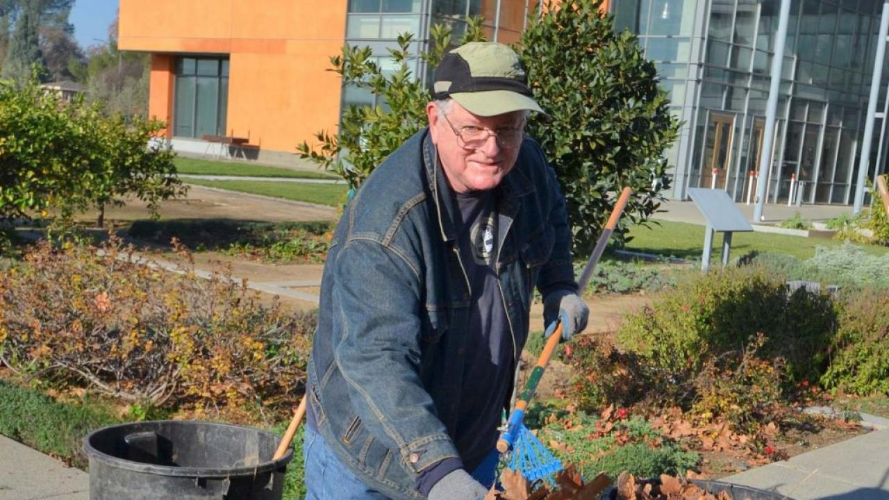 Larry Hoover, Arboretum And Public Garden Volunteer, Removes Leaves From  Around The Fruit Trees