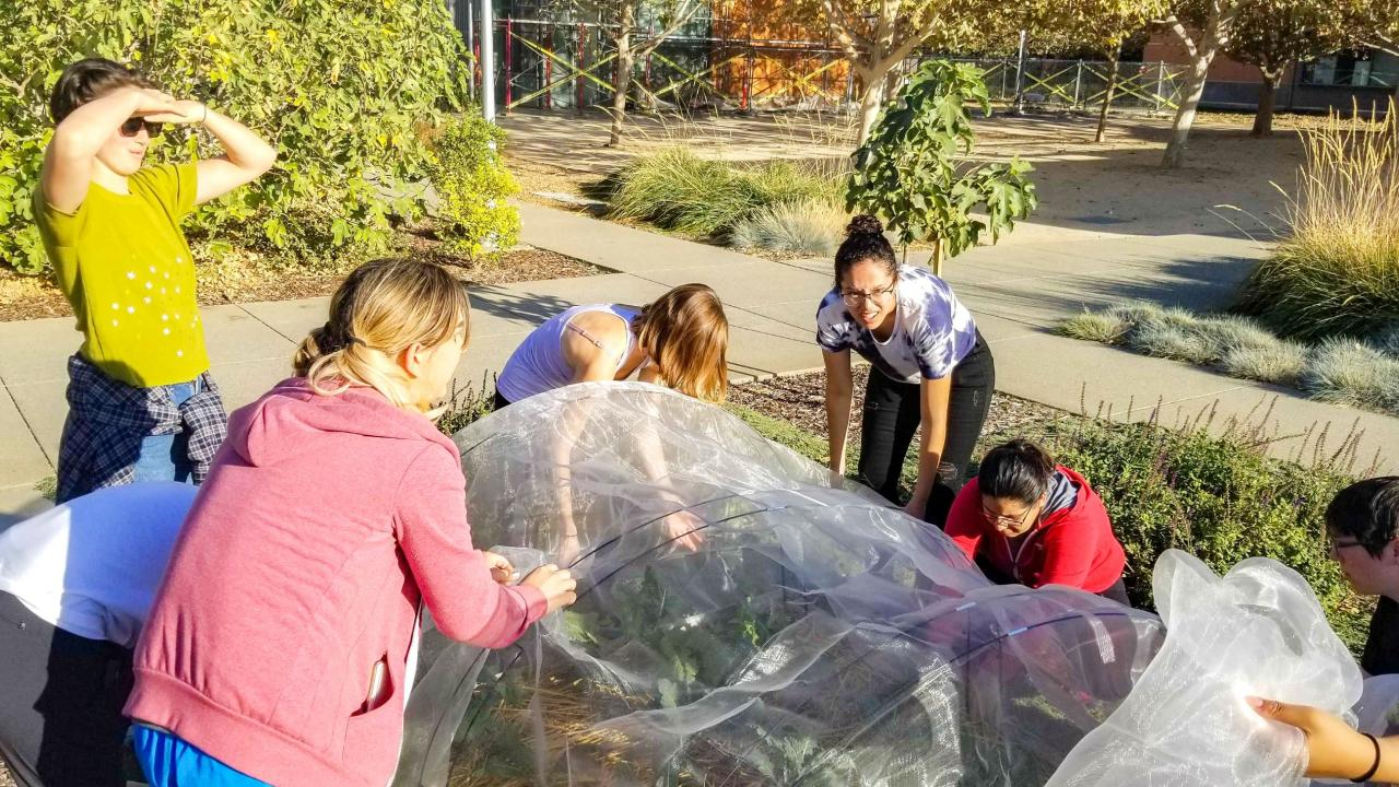 Students from the Edible Landscaping team work to install a row cover.