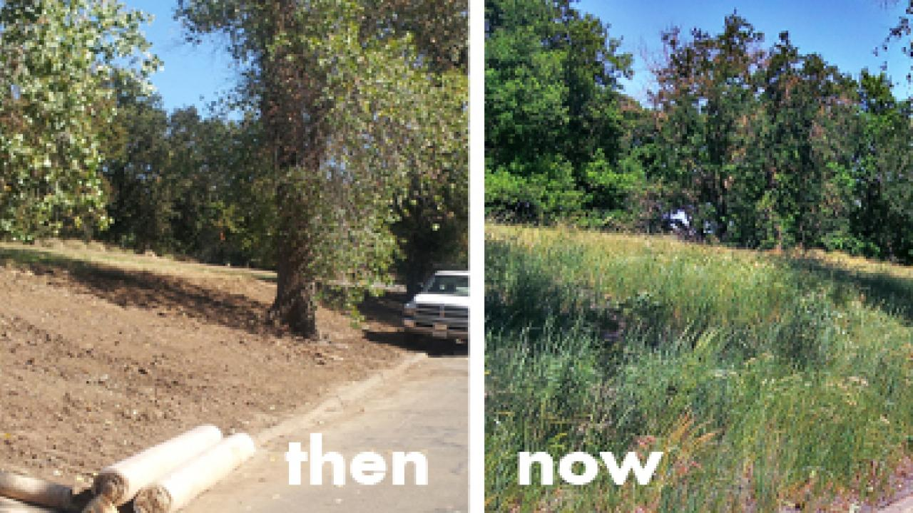before: dirt slope; after:grassy slope