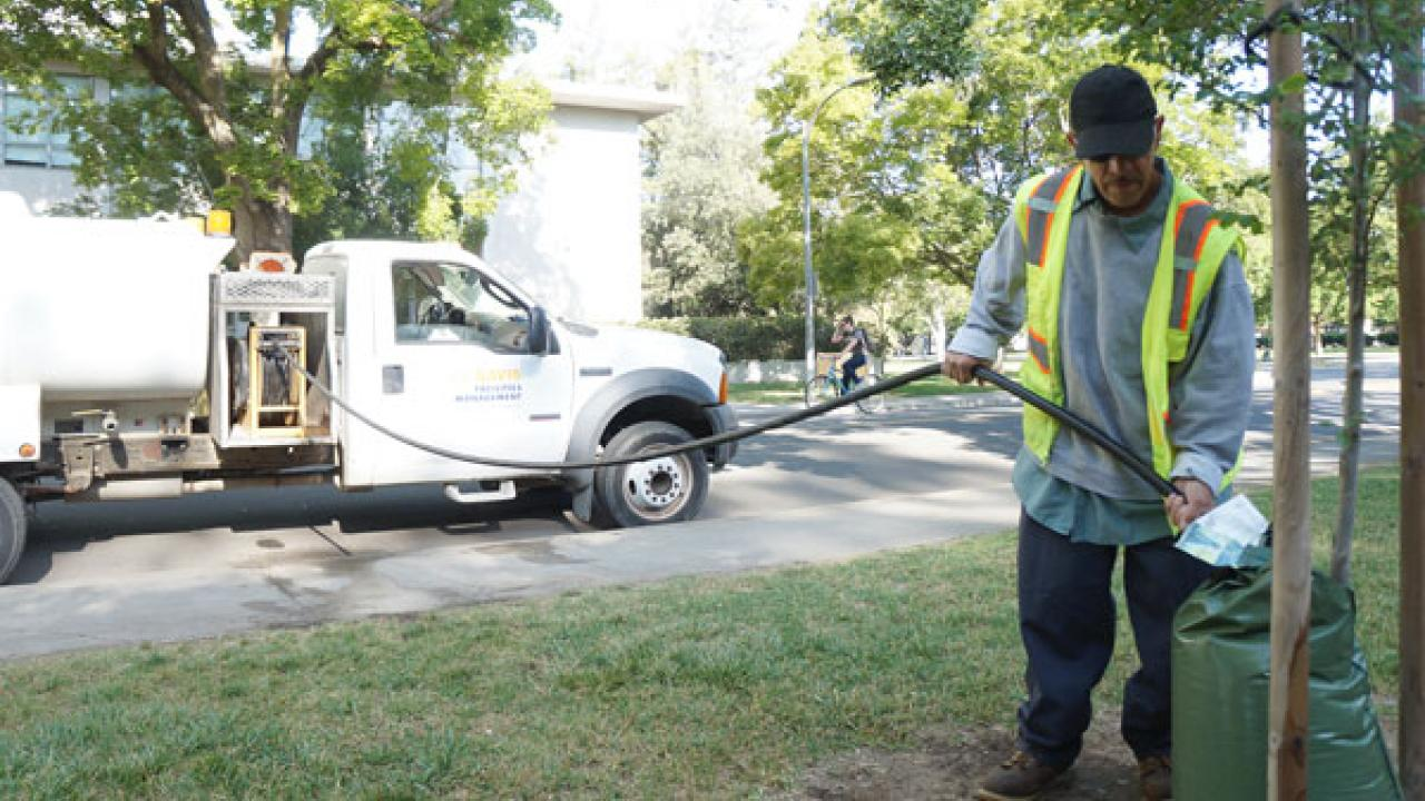 Willie Hernandez, groundskeeper with the UC Davis Arboretum and Public Garden's grounds and landscape services team