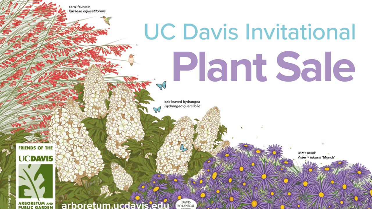Image of graphic for UC Davis Invitational Plant Sale