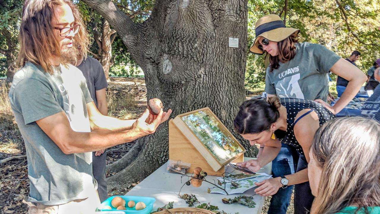 Photo of people in the Shield's Oak Grove learning about oak galls at an event called Oak Discovery Day.