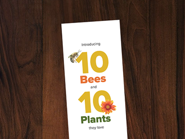 cover image of the 10 bees and 10 plants they love pamphlet