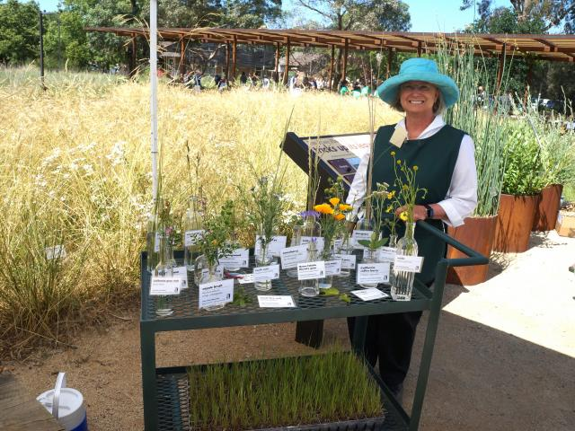 Image of Ann Daniel with samples of plants found in the Arboretum GATEway Garden.