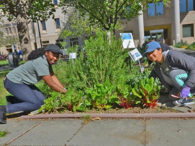 Image of Andrea Grant and Daisy Valdez planting the UC Davis Salad Bowl Garden in the Arboretum and Public Garden.