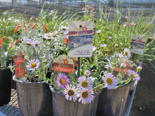 Image of Arboretum All-Stars in the UC Davis Arboretum Teaching Nursery.