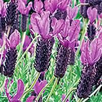 Plant Database   UC Davis Arboretum and Public Garden