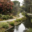 Image of the UC Davis Arboretum Australian / New Zealand Collection.